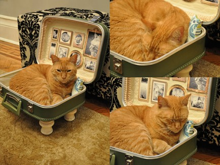 Diy Ideas For Spoiled Kitties Teal Cat Project