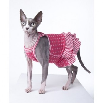Can Sphynx Cats Wear Collars